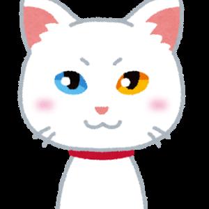 【ほのぼの】うちの猫の落ちてる猫ひげ発見するとなんか嬉しいww
