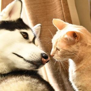 【画像】イッヌとネッコが仲良しの画像貼っていくで