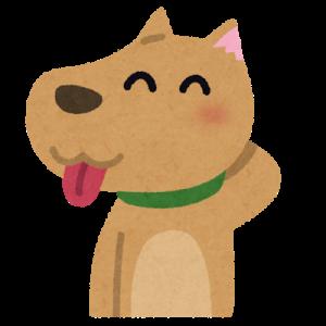 【ほのぼの】うちの犬は自分でおならをしたのに「お前がしたんだろ」って目で見てくるwww