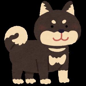 【画像】なぁ、この柴犬ちょっと美人すぎじゃないか?