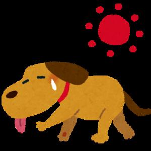 【ほのぼの】うちの犬、今日は暑すぎて散歩拒否してきたwww