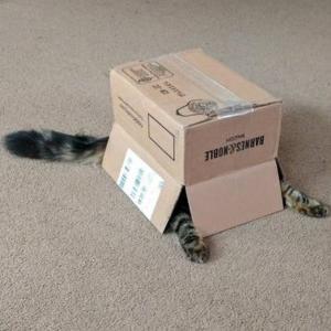 【ねこ画像】白鳥コスプレをしたおすまし猫さんが発見されるwww