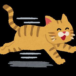 【画像】田舎の猫は何故あんなになつくのか