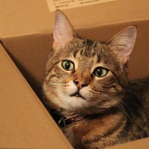 【画像】猫将、ホームセンターで買ってきたキャットハウスを拒否