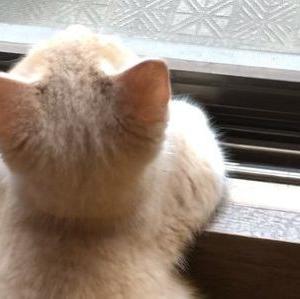 【ねこ画像】猫ってタマタマまで可愛いんだな、可愛いの完成形だなwww
