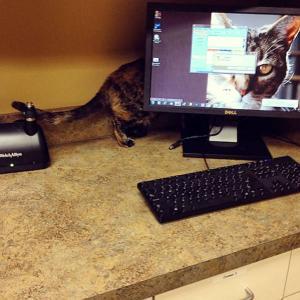 【ねこ画像】PCモニターの後ろに入ろうとする猫さん…壁紙のせいで錯覚しそうwww
