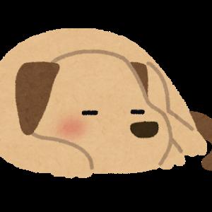 【画像】イッヌさん、お気に入りのぬいぐるみを抱いて寝るwwwギュッ