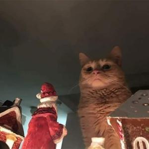 【ねこ画像】スーファミのリセットボタンに手をかける猫さん…そっ、それは本当にやめて下さい…