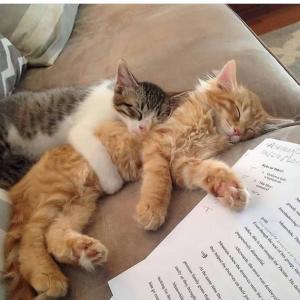 【画像】うちのネッコは子猫の頃からヤクルト見せて育ててるでwww