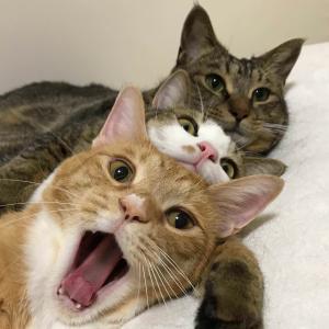 【ねこ画像】コスプレする黒猫さん…ニャースベイダーお似合いですwww