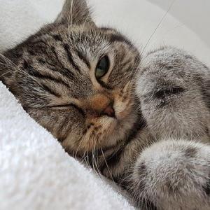 【画像】ネッコさん、飼い主さんの顔に優しくスリスリしてしまう…これはメロメロなるわwww