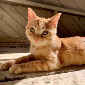【ねこ画像】カウンターの上にあるハムに手を伸ばす猫さん…あとちょっとだけどダメですよwww