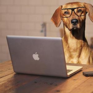 すみません。犬なのですが、ちょっと相談してもよろしいでしょうか?
