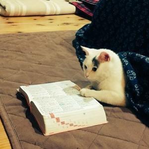 【ねこ画像】ブランケットにくるくる巻かれる猫さん…クレープみたいになってますwww