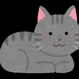 【画像】野良猫いた←いい感じのおデブさんwww