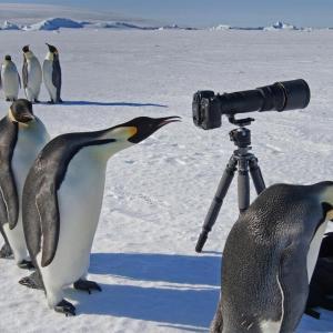 【画像】ペンギンとかいうヨチヨチ歩きの生物wwww