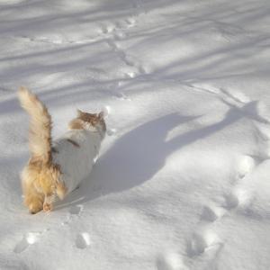 【ほのぼの】昨日、雪が積もったのを初めて見たうちの猫は何度も外見せてーと言いに来てたwww