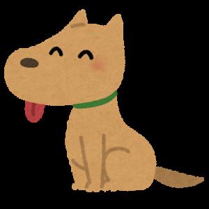 【画像】ワイん家の子犬、顔がちょっと幸薄そう…困り顔がたまらんwww