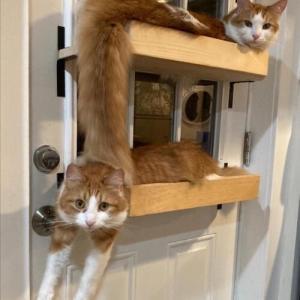 【画像】猫が伸びしてるよwww