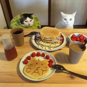 【ねこ画像】テーブルのパンケーキをうっとり見つめる猫さん…舌が出ちゃってますwww