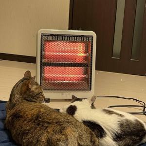 【画像】うちの猫、ストーブ前でまったり中…体が反りすぎかわええwww