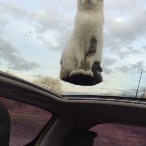 【画像】空中浮揚をする猫ちゃん、発見される…どこか飛んでいきそうwwww