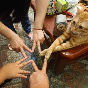【ねこ画像】お願いポーズの猫さんが現れる…そんな顔されちゃうと断れないですねwww