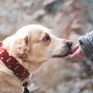 散歩友達だった二頭の犬が相次いで虹の橋を渡ってしまったんだが、 どちらの愛犬も挨拶に来たらしい