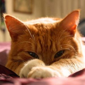 【ほのぼの】うちの猫が急に毎朝5時にニャーニャー鳴いて起こしてくれるようになったwww