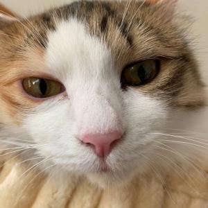 【ねこ画像】猫のお嬢さん、掃除したいのでどいてもらえませんか?←お気に入りのご様子www