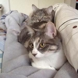 【画像】猫ちゃん、三段重ねになってしまうwwwywwwywwwywwwy