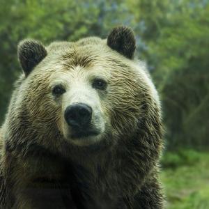【画像】福島県でクマと野犬がハイブリッドした生物が発見されるwwww