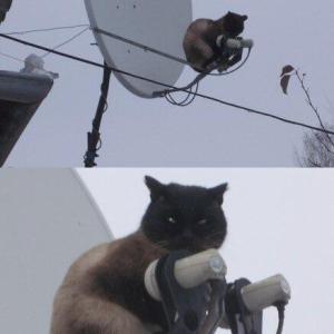 【画像】とんでもない所に出現する猫さん達…なぜそこにいるのwwww