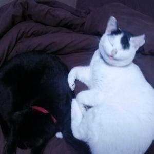 【画像多め】うちの猫さん、暗雲垂れ込めただけで怯える…まだ雷は鳴ってない模様wwww
