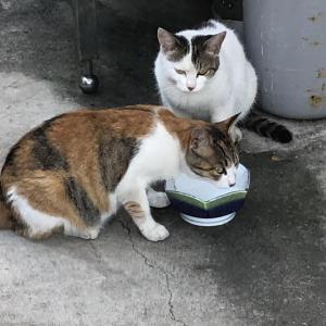 【画像】家の工場にネコが住み着いたわ…ぶっさいがかわええなwww