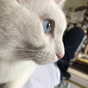 【ねこ画像】うちの猫様、おイタしてる時は目がキラッキラです…やっちゃいけない事はわかってるお顔ですねwww