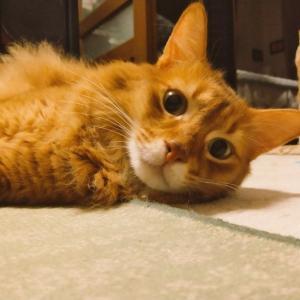 【画像多め】ネッコさん、虫取りゲームに夢中になってしまう…キレッキレの動きで草www