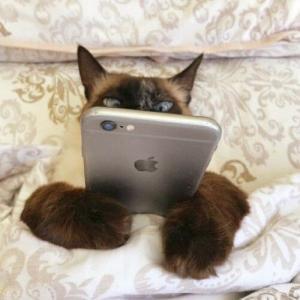 【ねこ画像】「オラァ!」とばかりに魚を投げつけてくる猫さん…ここはベッドの上なんですがwww