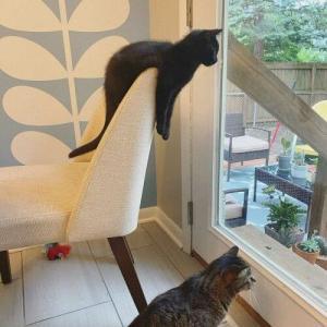 【ねこ画像】飼い主さんの膝でヘソ天になって寛ぐ猫さん…すごいアングルですねwww