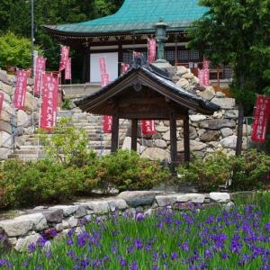 境内の池一面を彩るカキツバタ@神戸多聞寺 with K-5Ⅱs