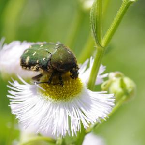 花壇で虫撮りにチャレンジ