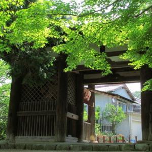 神戸の原生林?!@太山寺を訪ねて