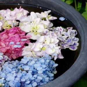 花の寺 円照寺を訪ねて