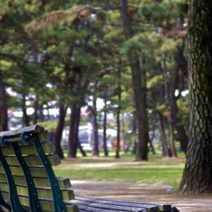 松並木を歩く@加古川浜の宮公園