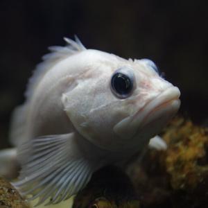 水族館の魚の撮影@悪戦苦闘編