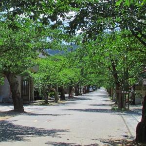 日本で最も美しい村@新庄村
