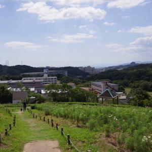 神戸総合運動公園@コスモスの丘