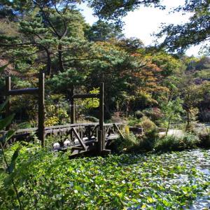 六甲を歩く(3) 六甲高山植物園