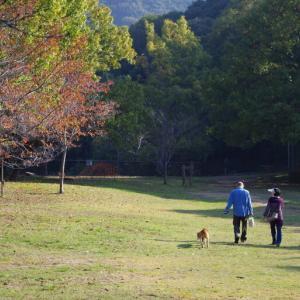 晩秋の森を歩く@奥須磨公園にて