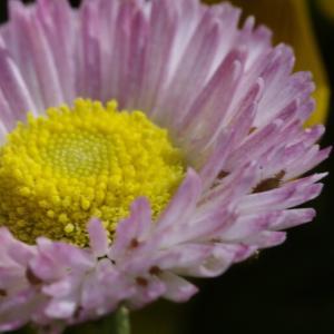 タム9で撮る花壇の花たち